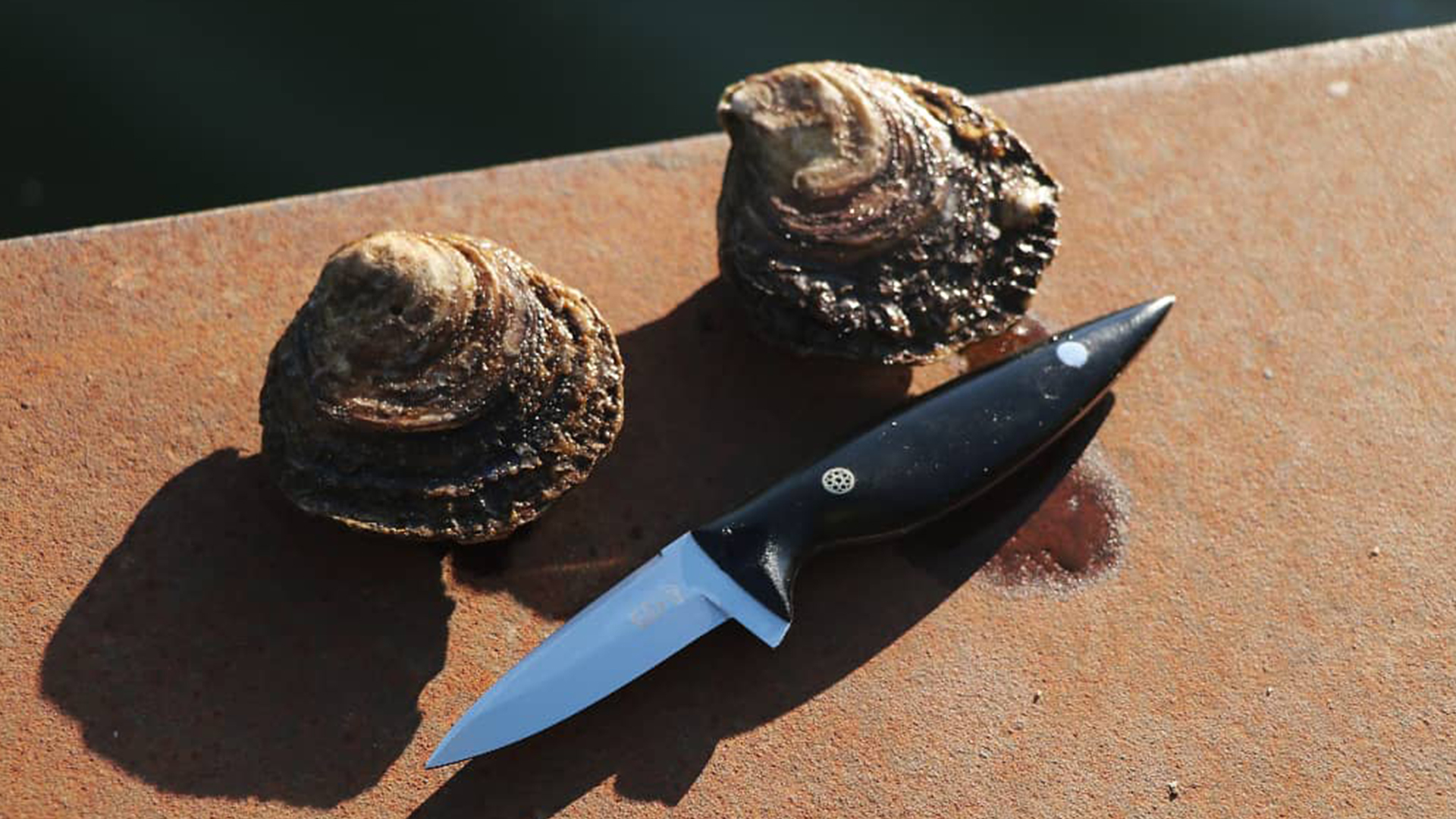 A ''Pearl'' type oyster shucker. Made exclusively for Zeeland's Roem.